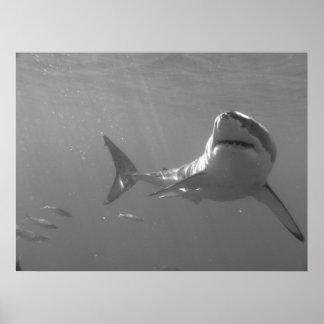 El nadar con los tiburones posters