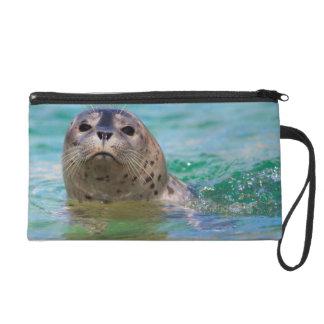 El nadar con una cría de foca