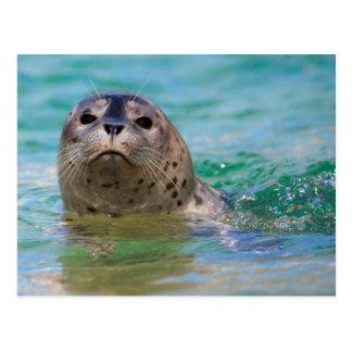 El nadar con una cría de foca postal