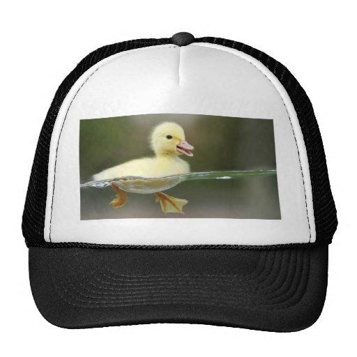 el nadar del pato del bebé lindo gorra