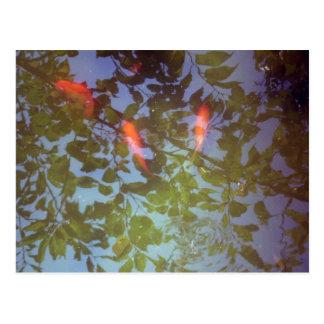 El nadar en hojas postal