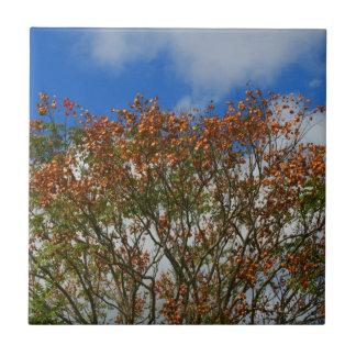 El naranja del cielo azul del árbol florece imagen azulejo cuadrado pequeño
