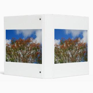 """El naranja del cielo azul del árbol florece imagen carpeta 1"""""""