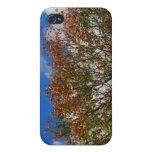 El naranja del cielo azul del árbol florece imagen iPhone 4 protectores