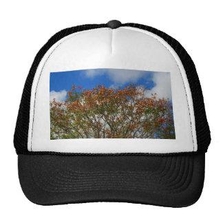 El naranja del cielo azul del árbol florece imagen gorros bordados