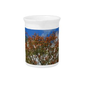 El naranja del cielo azul del árbol florece imagen jarra de beber