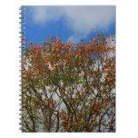 El naranja del cielo azul del árbol florece imagen libreta