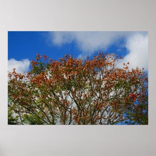 El naranja del cielo azul del árbol florece imagen impresiones