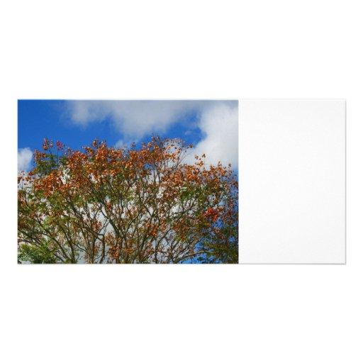 El naranja del cielo azul del árbol florece imagen tarjetas fotográficas