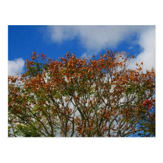 El naranja del cielo azul del árbol florece imagen tarjeta postal