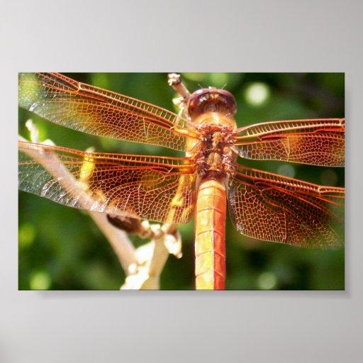 El naranja deslumbra la libélula póster