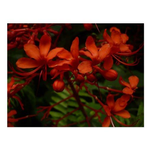El naranja florece la postal del  