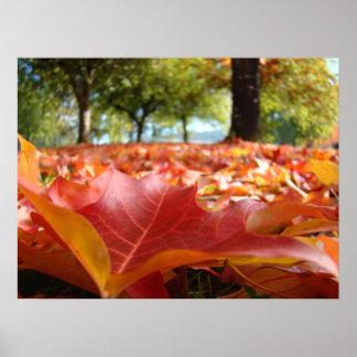 El naranja rojo de los posters de las hojas del ár
