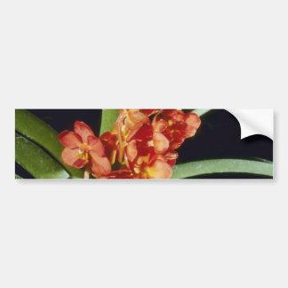 El naranja Yip las flores de Wah de la suma (Ascoc Etiqueta De Parachoque