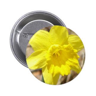 El narciso amarillo florece alrededor del botón pin redondo de 2 pulgadas