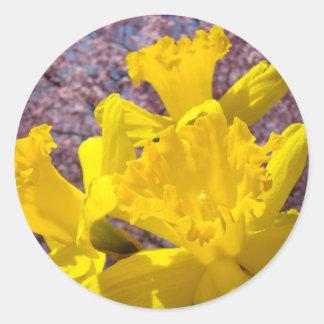 El narciso amarillo florece los sellos del sobre pegatina redonda