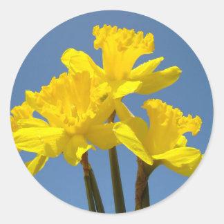 El narciso florece el cielo azul floral amarillo pegatina redonda