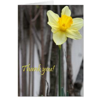 El narciso le agradece felicitación