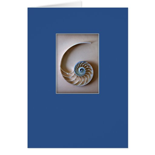 El nautilus Shell secciona Felicitaciones