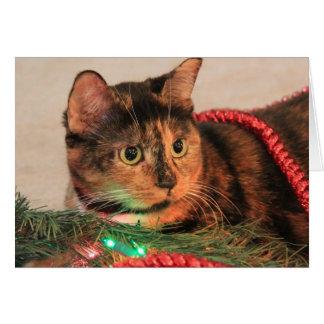 ¡El navidad calicó, gato tiene gusto de luces! Tarjeta De Felicitación
