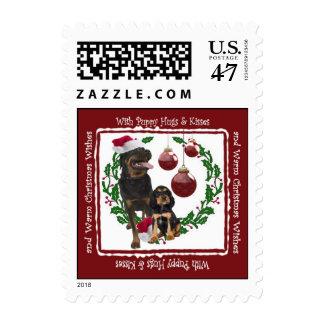 El navidad de Rottweiler abraza y besa el sello 3