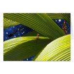 El navidad tropical de un lagarto del Gecko Tarjeta De Felicitación