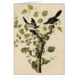 El necio Shrike de Audubon Tarjeton
