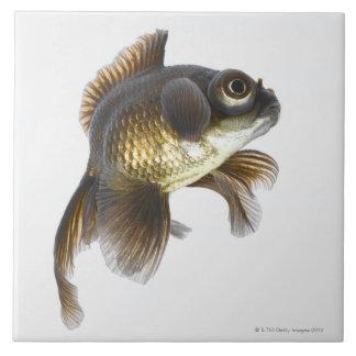 El negro amarra el goldfish (auratus del Carassius Azulejo Cuadrado Grande
