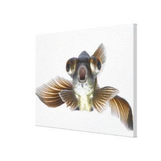 El negro amarra el goldfish (auratus del Carassius Impresiones En Lienzo Estiradas
