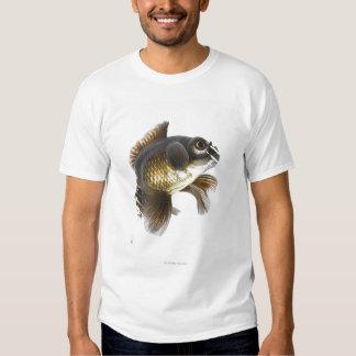 El negro amarra el goldfish (auratus del remeras