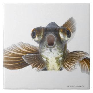 El negro amarra el goldfish (el auratus del Carass Azulejo Cuadrado Grande