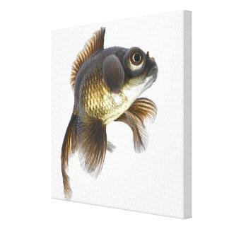 El negro amarra el goldfish (el auratus del Carass Impresiones En Lona