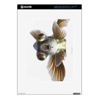 El negro amarra el goldfish (el auratus del Carass iPad 3 Skin