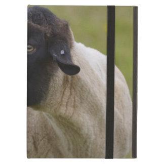 El negro hizo frente a ovejas