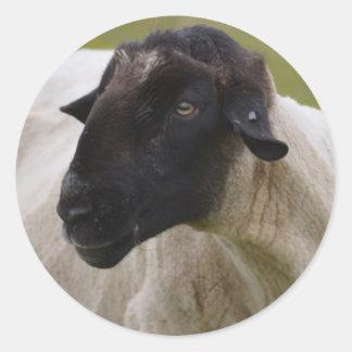 El negro hizo frente a ovejas pegatina redonda