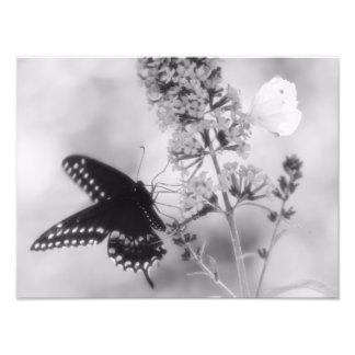 El negro y la una fotografía blanca de la mariposa arte con fotos