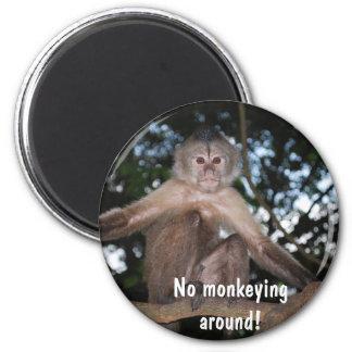 ¡El ningún monkeying alrededor! (mono con la erecc Imán Redondo 5 Cm