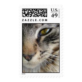 El ojo de gato de Coon de Maine Sello