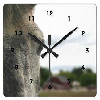 El ojo de un animal del caballo reloj cuadrado