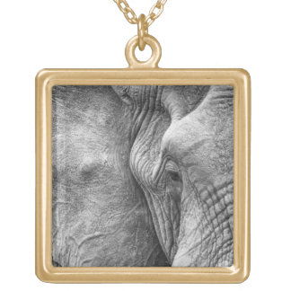 El ojo de un elefante collar dorado