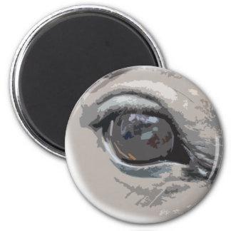 El ojo del caballo gris llano iman de nevera