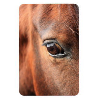 El ojo del caballo iman de vinilo