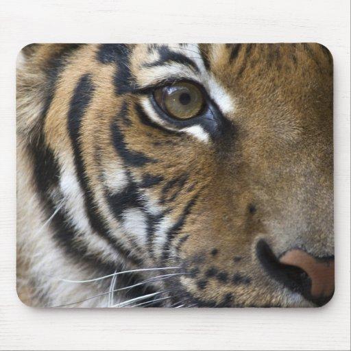 El ojo del tigre alfombrillas de ratones