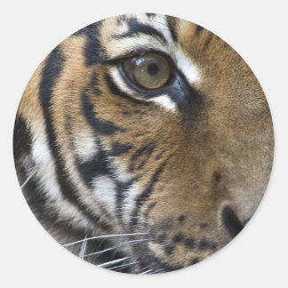El ojo del tigre pegatina redonda