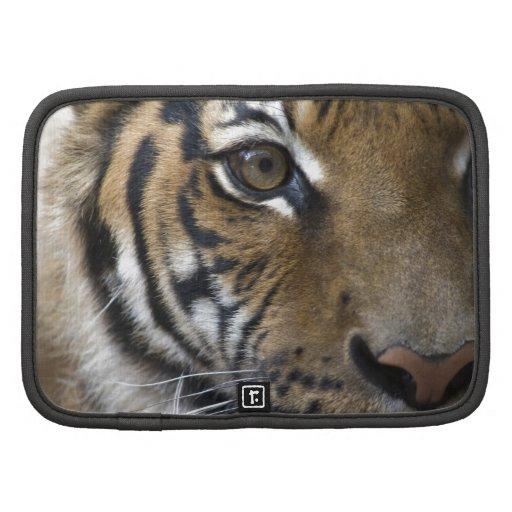 El ojo del tigre planificador