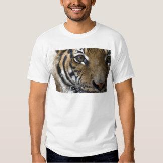 El ojo del tigre poleras