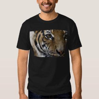 El ojo del tigre remeras