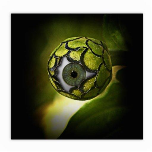 El ojo le verá en el jardín esculturas fotográficas