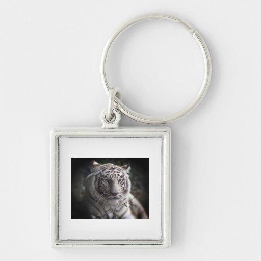 El ojo vigilante del tigre llavero cuadrado plateado