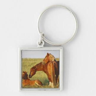 El oler adulto salvaje del caballus del Equus del  Llaveros